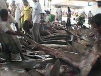 Sfruttamento degli squali
