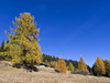 Autumn colors in Valdidentro - Alta Valtellina