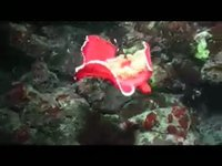 Piccole creature sott'acqua