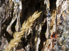 Gocce di Natura nel Parco dello Stelvio
